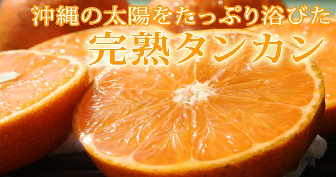 沖縄の太陽をたっぷり浴びた完熟たんかん