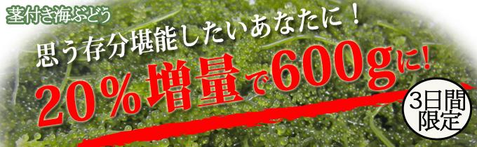 茎つき600g