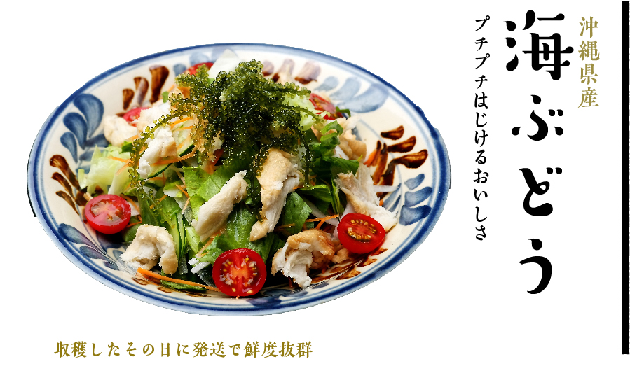沖縄県産  海ぶどう プチプチはじけるおいしさ 収穫したその日に発送で鮮度抜群